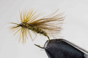 dry_nv_cdc_caddis_olive_032